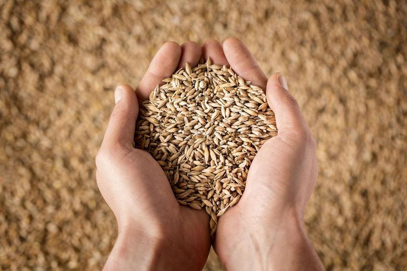 A növénybiztosítás fontossága napjainkban