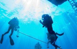 Ismerje meg a tengerek élővilágát saját szemével!