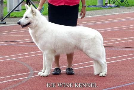 Fajtiszta kutyát szeretne?