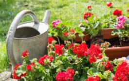 Stílusos kerti eszközök