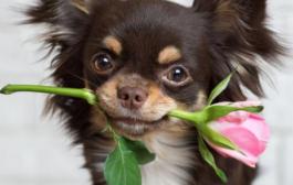 A minőségi kutya fekhelyek