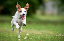 A kutya porcok és ízületek egészsége