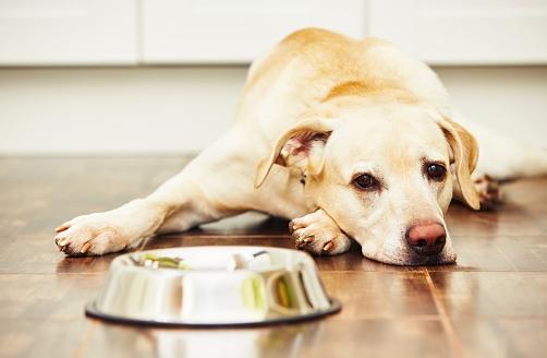 A tápláló kutyatáp