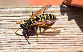 Profi segítség rovarok és rágcsálók esetén!