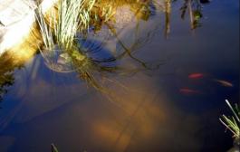 Az algamentes tó