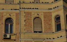 A galambok kellemetlenségei