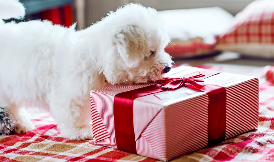 A praktikus állati ajándékok