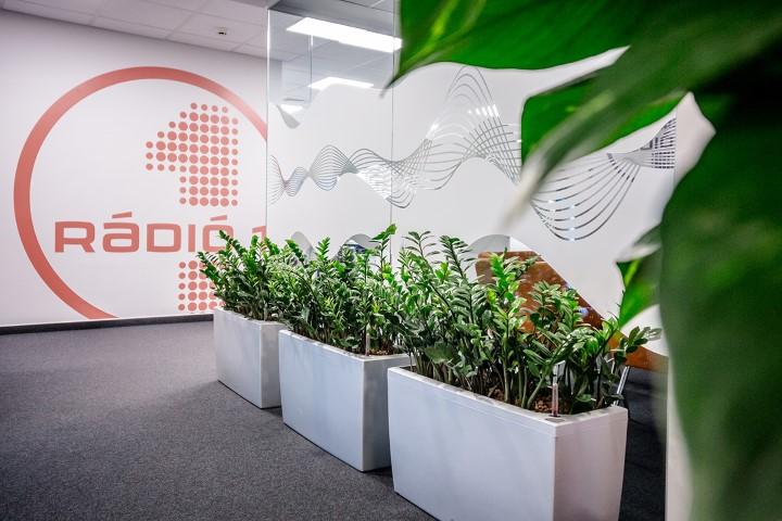 Természetes iroda növénydekorációkkal
