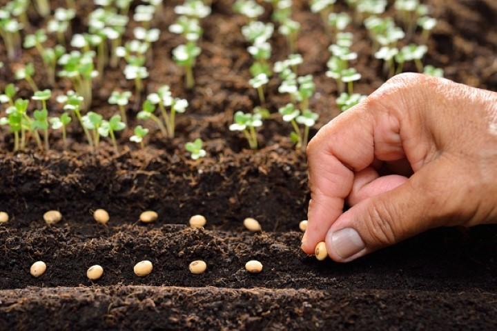 Megbízható vetőmagos termeltetőt keres?