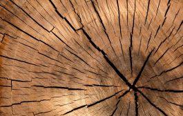 Veszélyes fák kivágása: kérje ajánlatunkat!