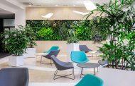 Zöldfallal az irodába költöztetheti a természetet